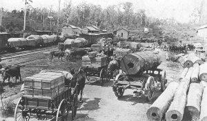 Palmwoods Railway C. 1916