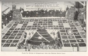 Produce from Montville on display 1927