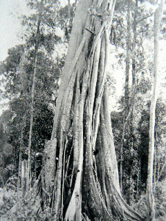 timber_felling