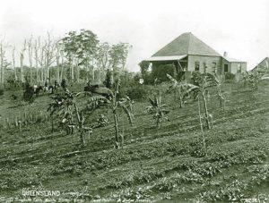William Simpson's Farm, North Maleny