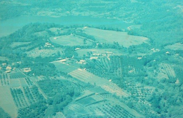 Gorsch_Avocado_Farm_late_1980s
