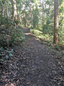 Tcheergun (Blackbutt Tree) Track