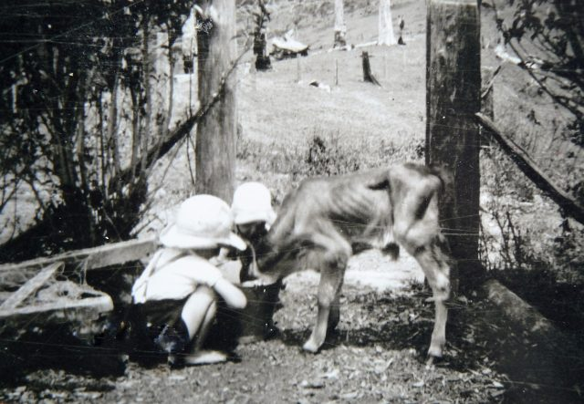 Grant and Kenneth with a poddy calf
